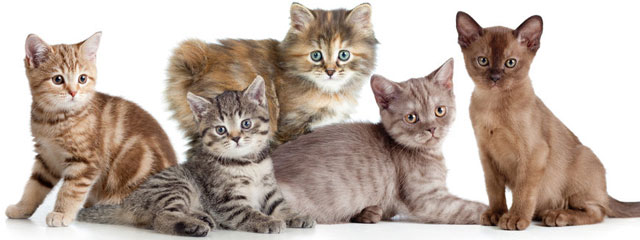 Dry Skin in Cats