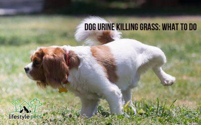 Dog Urine Killing Grass: What to Do