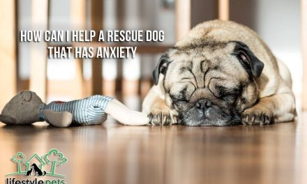 How Can I Help a Rescue Dog that has Anxiety?