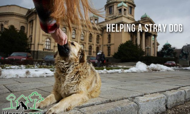 Helping a Stray Dog