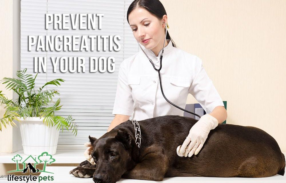 Prevent Pancreatitis in Your Dog