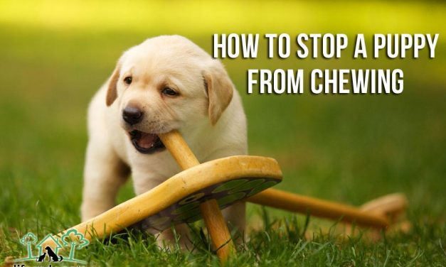How to Stop a Puppy from Chewing