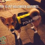 Top 10 Pet Halloween Costumes