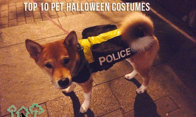 Top 10 Pet Halloween Costumes