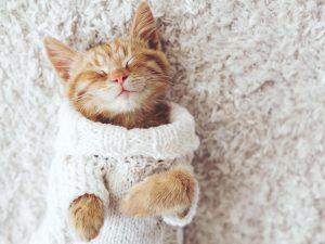 Kitten sleeping secure over a carpet.