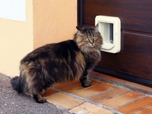 A big cat in front of the door.