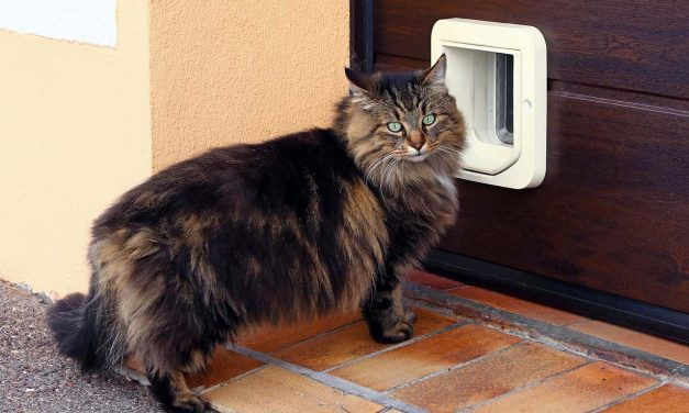 The Best Cat Doors of 2019
