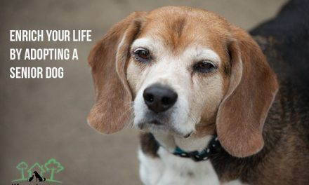 Enrich Your Life by Adopting a Senior Dog
