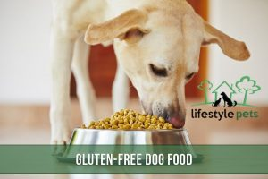 A dog eating gluten-free food.