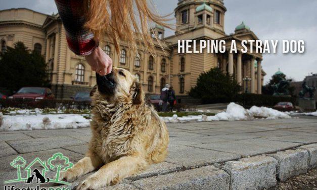 Helping a Stray Dog