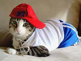 A cat with red cap and clothes.