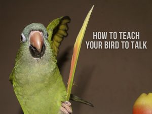 A green parrot talking.
