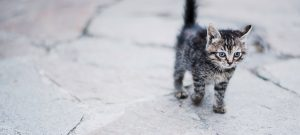Kitten walking.