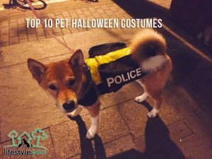 A dog with a police costume.