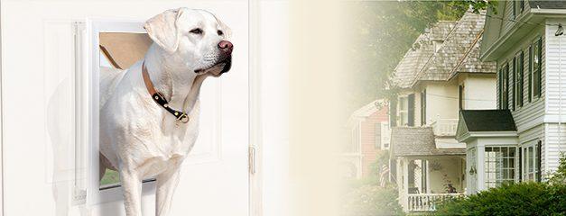 The Best Dog Doors of 2020