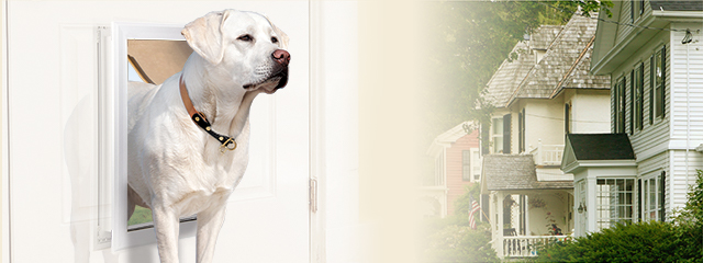 The Best Dog Doors of 2020