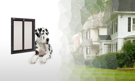 The Best Dog Doors of 2019