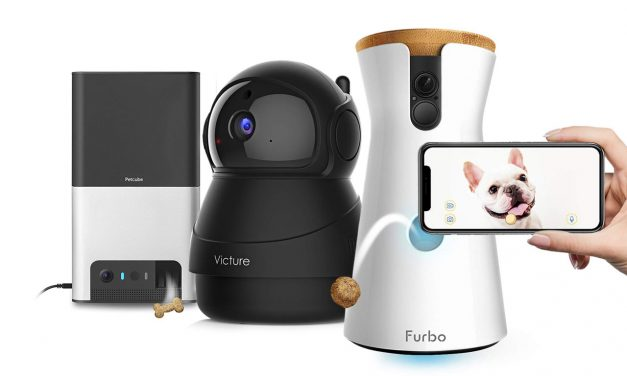 The Best Pet Cameras of 2019