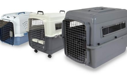 The Best Airline-Approved Dog Crates of 2019